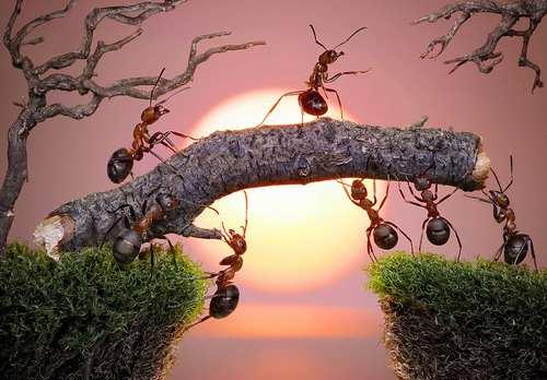 formiche a lavoro